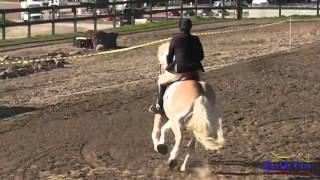 152S Connie Arthur SR Intro Rider Stadium Jumping Fresno County Horse Park Feb 2013