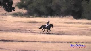 044XC Rebecca Braitling On Domina D'Revel Open Training Cross Country Camelot July 2015