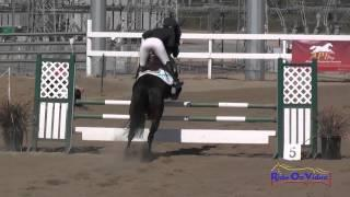 195S Kelly Pugh on Tito Open Training Show Jumping Fresno County Horse Park Oct 2014