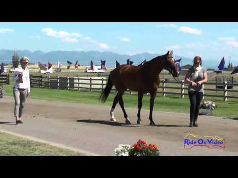 011J1 Erin Serafini On Another Star CCI1* FEI Jog 1 The Event At Rebecca Farm July 2015