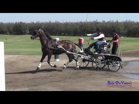 048M Tayler Roundtree Preliminary Single Horse Marathon Shady Oaks September 2016