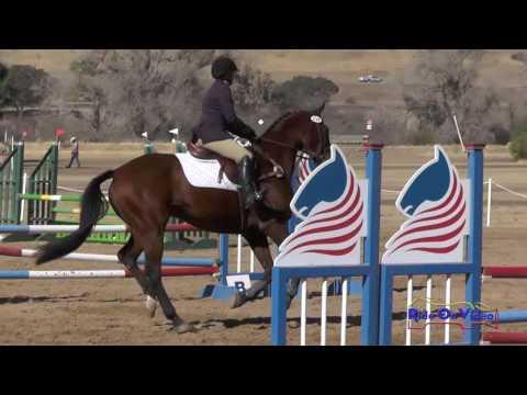 220S Rebecca Fiedel On Prince Noah SR Novice Show Jumping Twin Rivers Ranch Sept. 2016