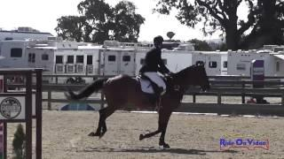 071S Aaron Schneider on Mitchell's Day JR Training Show Jumping Woodside August 2014