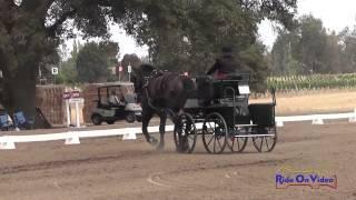 39D Amy Weispfenning Training Single Horse Dressage Sargent Equestrian CDE August 2014