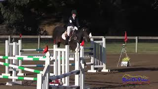 113S Madeleine Blinoff on Ranger Open Preliminary Show Jumping Shepherd Ranch August 2017