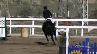 105S Bethany Wallace on Domina D'Revel Open Novice Show Jumping FCHP November 2014