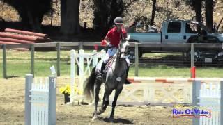 236S Stacey Winter On True Man Open Beginner Novice Show Jumping Shepherd Ranch June 2015