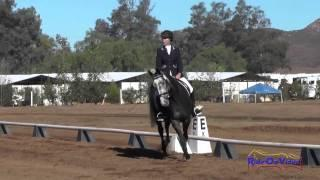151D Hilary Niemann on Undercover Open Training Dressage Copper Meadows September 2014