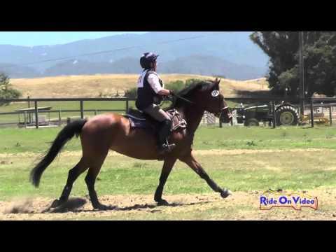 224XC Beth Kelley On Cady O Daly Mistletoe SR Beginner Novice Cross Country Shepherd Ranch June 2015