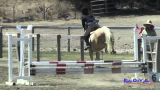 117S Emilee Fine On Gracie Intro Show Jumping Shepherd Ranch August 2015