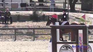 074S Megan Traynham on DBCOOPER JR Training Show Jumping Woodside August 2014