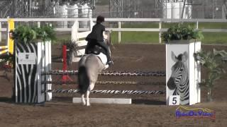 199S Hailey Johnson on Paint Me Perfect JR Novice Show Jumping FCHP February 2015