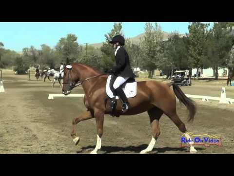 211D Pat McFarland On Duet Open Novice Dressage Twin Rivers Ranch Sept 2015