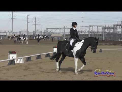 142D Pamela Robins On Tuxedo Skips Sparkle SR Beginner Novice Dressage FCHP November 2016
