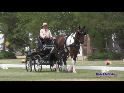 035D Clay Maier Preliminary Single Horse Dressage Clay Station CDE June 2016