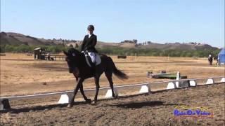 222D Alexandra Terlesky Novice Rider Dressage Area VI Championships Twin Rivers Ranch Sept 2013