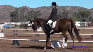 137D Tylia Schoenwald Aramé Preliminary Rider Dressage Copper Meadows September 2014