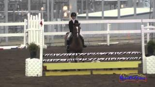 172S Lucy Hinton on Zack's Got A Knack JR Beginner Novice Show Jumping FCHP November 2014
