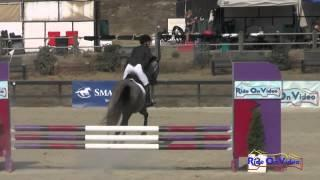 380S Sophie Dixon Sutton On Sophocles Open Beginner Novice Show Jumping Woodside August 2015