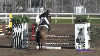 227S Matthew Brown on Rio's Rock Star Novice Horse Show Jumping FCHP February 2015