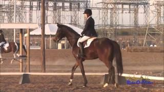 201D Bailey Brantley JR Beginner Novice Rider Dressage Fresno County Horse Park Nov. 2013