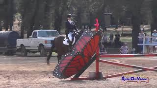 034S Brianna Davis on Palace Verdes JR Novice Show Jumping Eventful Acres September 2017
