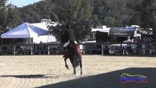 019S Pam Fisher on Rigby CIC2* Show Jumping Woodside Int'l Event Oct 2014
