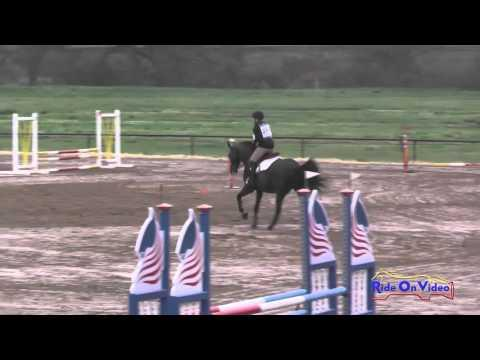 286S Allison Wojslaw On Zanzibar Intro Show Jumping Twin Rivers Ranch March 2016