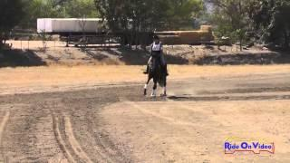 271XC Tayler Ravenscroft Open Beginner Novice Cross Country Twin Rivers Ranch Sept 2014