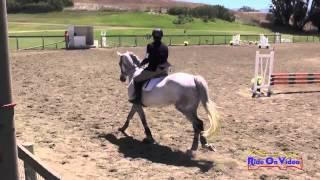 105S Staci Hill on Platinum CF Senior Intro Cross Country Shepherd Ranch August 2014