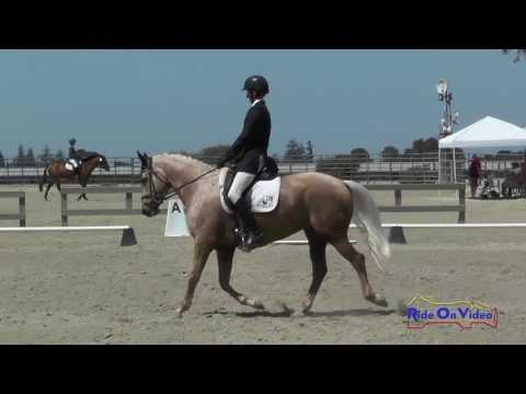 238D James Alliston On Pandora Open Novice Dressage Woodside August 2016
