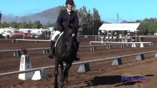 265D Carolyn Hoffos on Zayed Open Training Dressage Copper Meadows September 2014