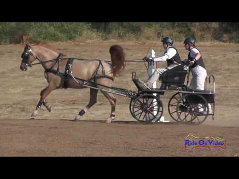 035M Phyllis Grupe Preliminary Single Pony Marathon Sargent Equestrian CDE Aug. 2016