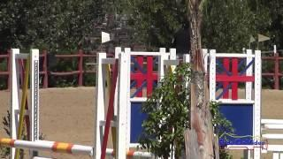 310S Cassidy Wallace on Discover Me JR Beginner Novice Show Jumping Copper Meadows September 2014