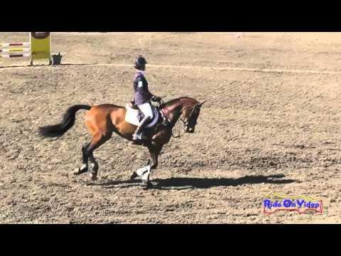 267S Jolie Wentworth On Coolattin Open Training Show Jumping Galway Downs Int'l Nov. 2015