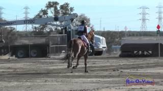 051XC Tracey Alves on Romulus SR Training Cross Country FCHP April 2015