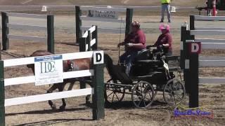 19M Teresa Jump Training Single Horse Marathon Sargent Equestrian CDE August 2014