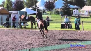 222S James Atkinson on Pinotage SR Training Show Jumping The Event at Rebecca Farm July 2014