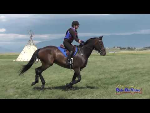 291XC Kathryn McKinstry On Ogopogo SR Open Training Cross Country Rebecca Farm July 2016