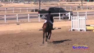 173S Jazmin Holguin on Winter's Fable Intro Show Jumping Fresno County Horse Park Oct 2014