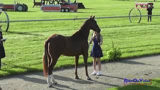 387J2 Ava Holmes on Trouble With Tribute Novice 3-Day Jog 2 Rebecca Farm July 2019