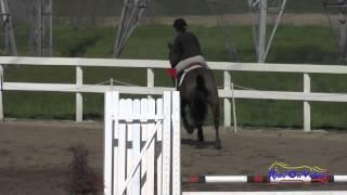 252S Scout Sanders on 90 Shilling YR Beginner Novice Show Jumping FCHP February 2015