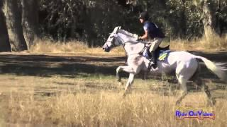 010XC Maddy Mazzola on Mojito CIC3* Cross Country Woodside Int'l Event Oct 2014