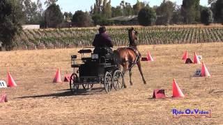 19C Teresa Jump Training Single Horse Cones Sargent Equestrian CDE August 2014