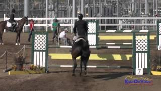 047S David Adamo on Henry Intermediate Show Jumping FCHP February 2015