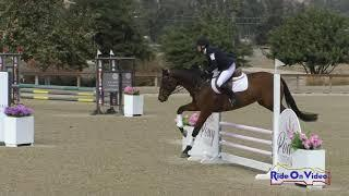 261S Kirsten Freed on Jasper Open Novice Show Jumping Galway Downs Oct. 2020