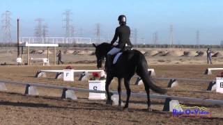 019D Pascale Winnick on Talisker Preliminary Rider Dressage FCHP November 2014