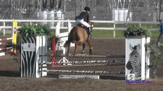 156S Dana Spafford on Rocky SR Training Show Jumping FCHP February 2015