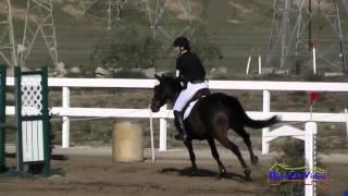 113S Bethany Wallace on Continuum Open Novice Show Jumping FCHP November 2014