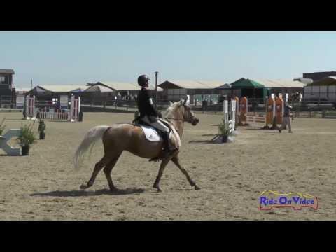 238S James Alliston On Pandora Open Novice Show Jumping Woodside August 2016
